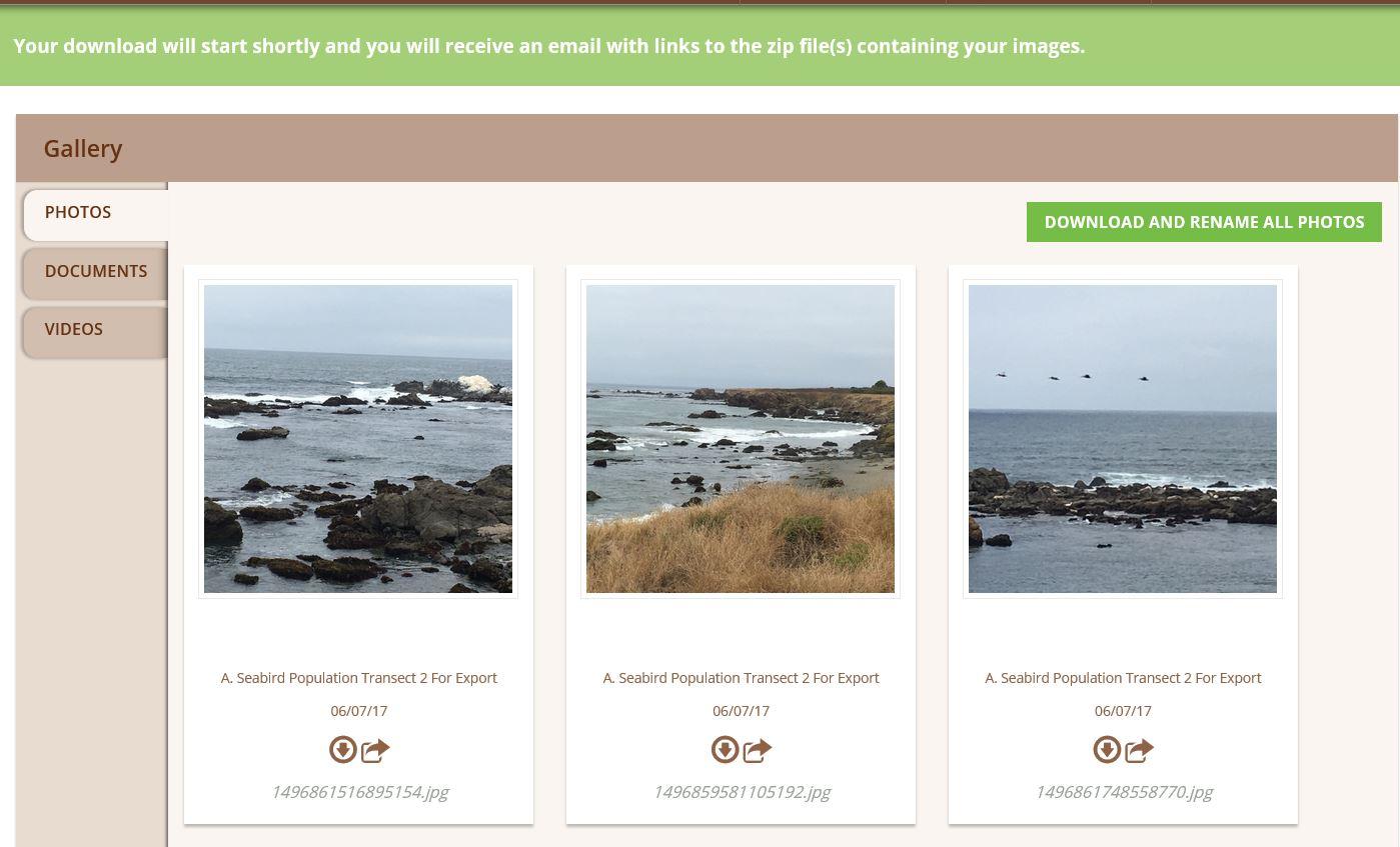 Image of Wildnote photo gallery screenshot showing green indicator status bar informing user of zip file download.