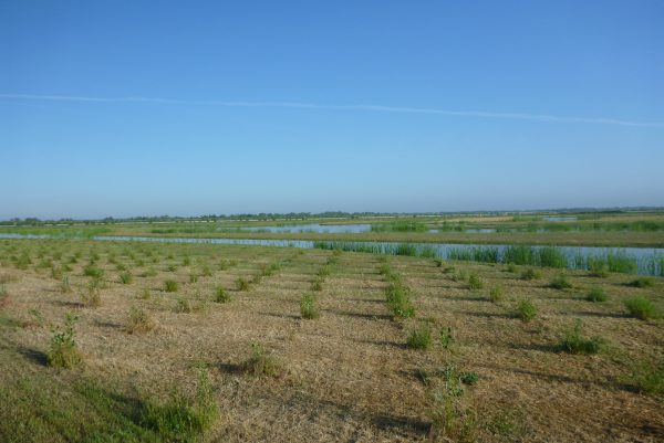 Image of River Ranch wetlands after conservation in 2014.