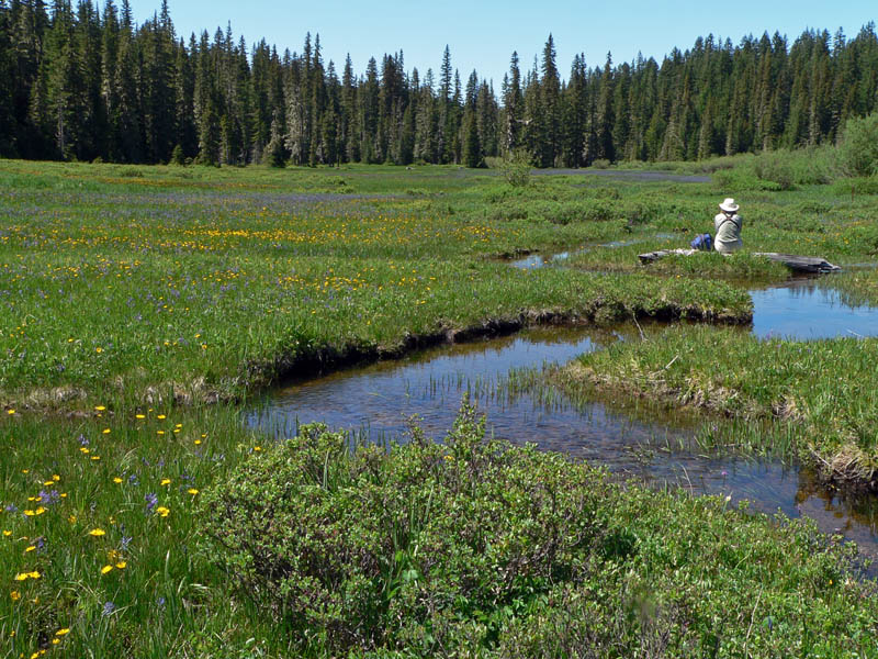 wetland meadow with meandering stream and person sitting on log