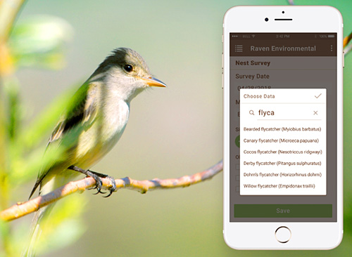 Small bird sitting on branch, alongside close-up of mobile phone showing app with different bird species.
