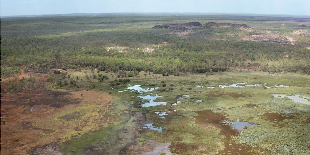 drone-wetland-invasive grass